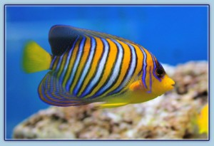 Parrys Marine Fish Lincoln
