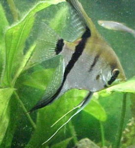 Tropical Fish In Stock