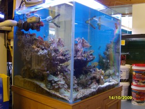 reef display at perrys aquatics