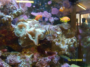 reef fish tank