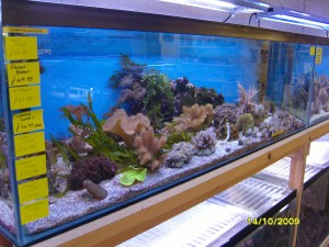 One of our coral tanks