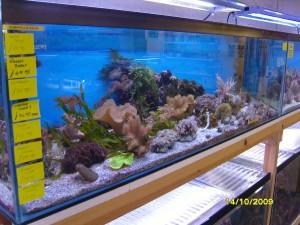 soft coral tank