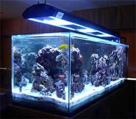 aquarium lighting guide