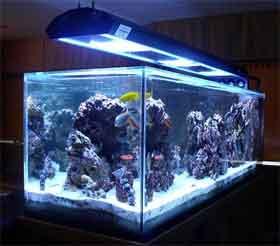 Perry's Aquarium reef-lighitng