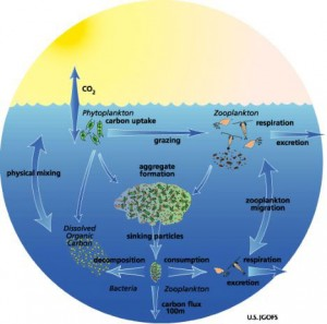 The Big Fish Eat the Little Fish & Phytoplankton