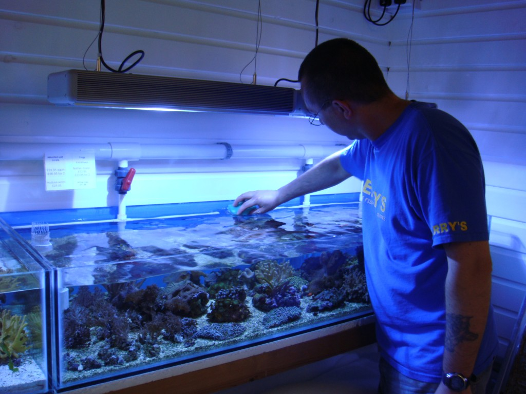 Wayne Cleaning a Reef Tank