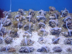 Learn How to Feed and Keep Hard Corals