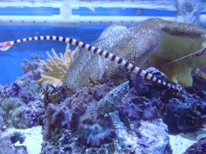 Top 10 Tips for Setting Up a Marine Fish Tank