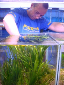 Perry's 10 Tips to Setting up a Planted Aquarium