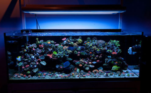 How to Choose Aquarium Lights