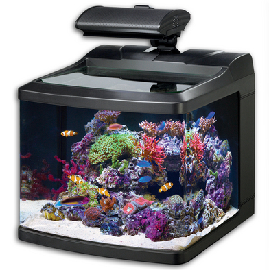 nano tank for marine fish