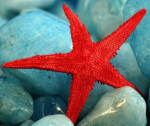 Understanding the Red Starfish