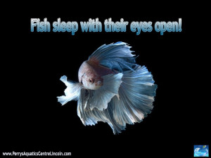 Fish Sleep But Their Eyes Still Open