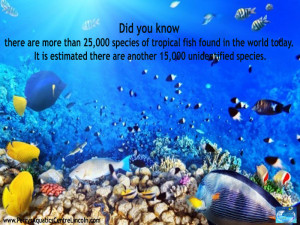 Species Of Tropical Fish