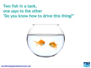 If There Are Two Fish In A Tank