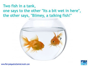 A Talking Fish