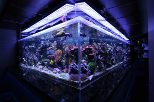 Lighting for Your Coral Tank