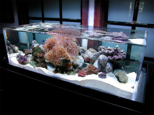 aquarium water quality