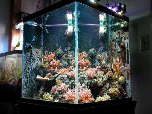 live rock in aquarium