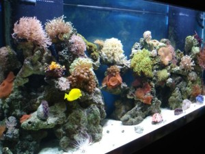 marine fish -aquarium - Lincoln