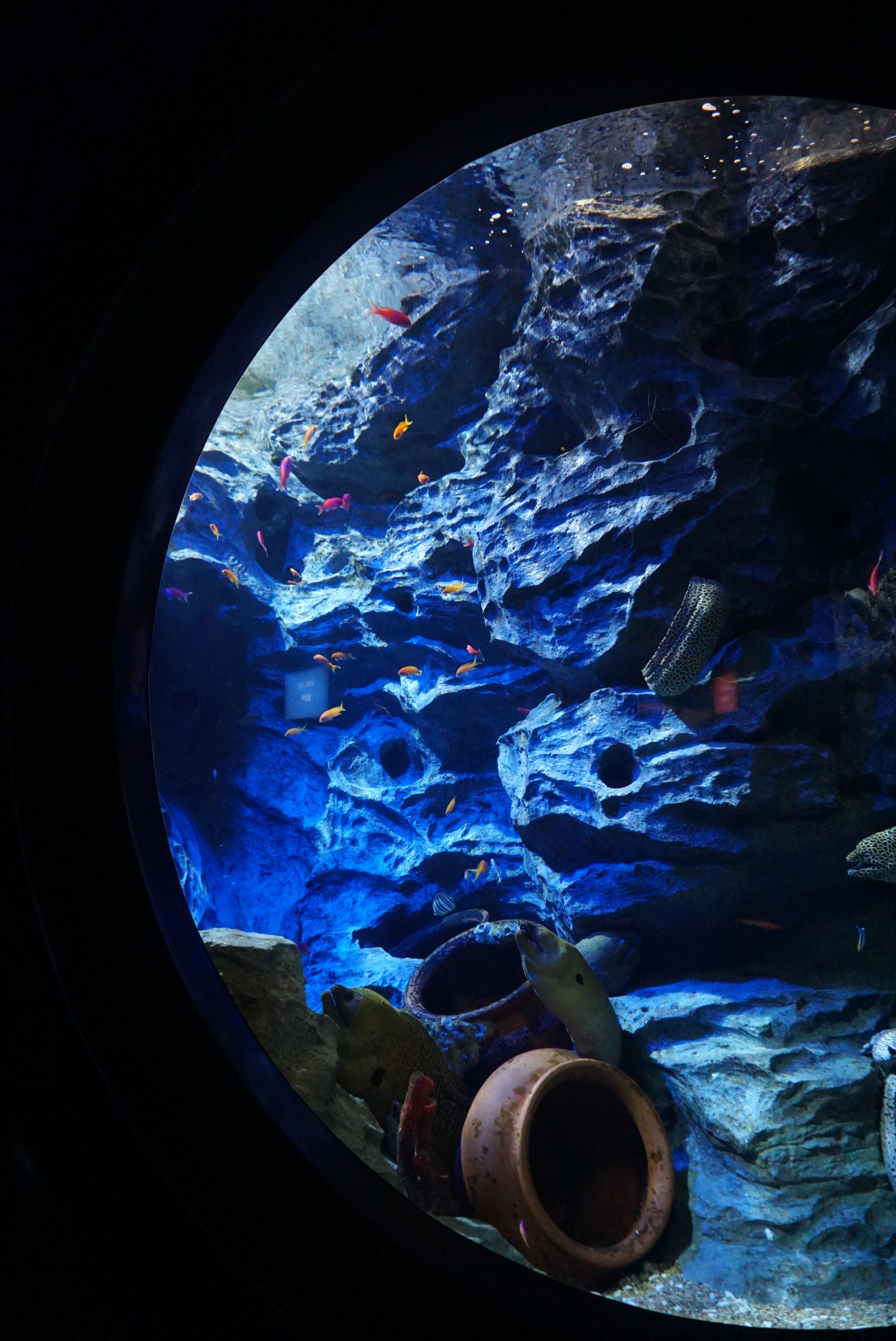 aquatic decoration