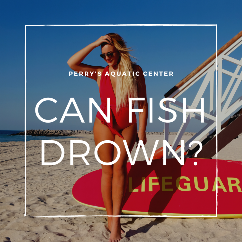 Can Fish Drown - Perry's Aquatic Center