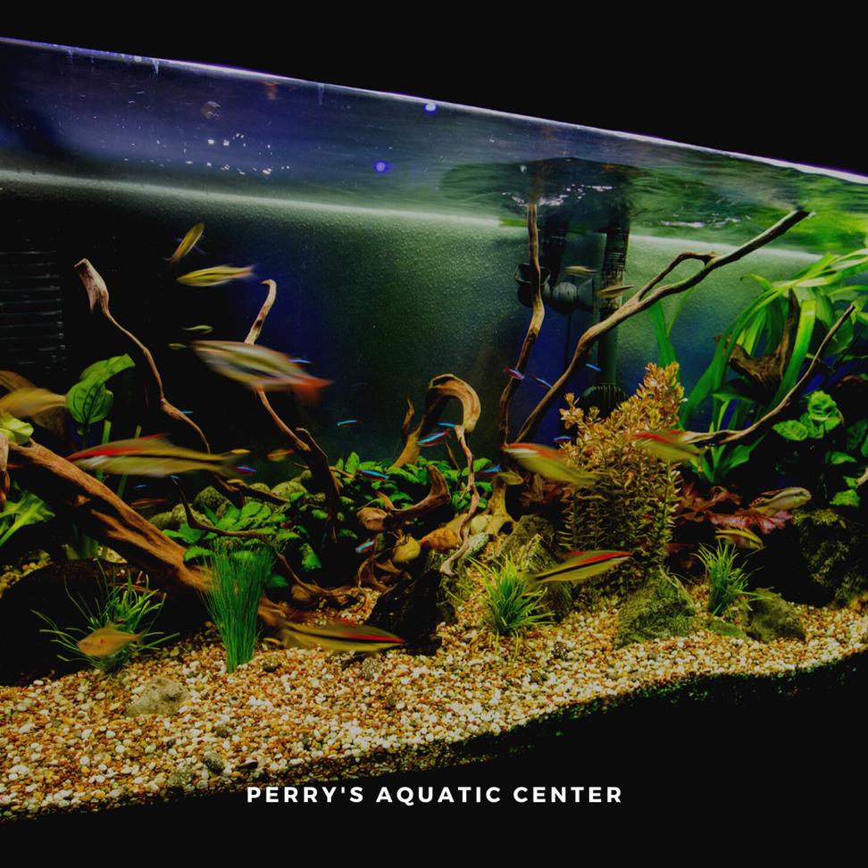Best Aquariums in Lincoln