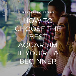 How to Choose the Best Aquarium if You're a Beginner
